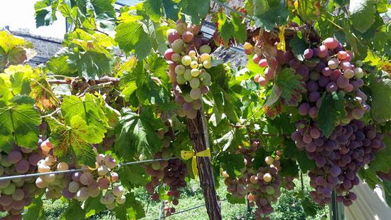 Frutas de la Provincia Modesto Omiste