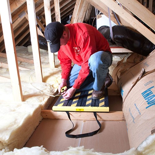 Insects in the City: Attic Safety