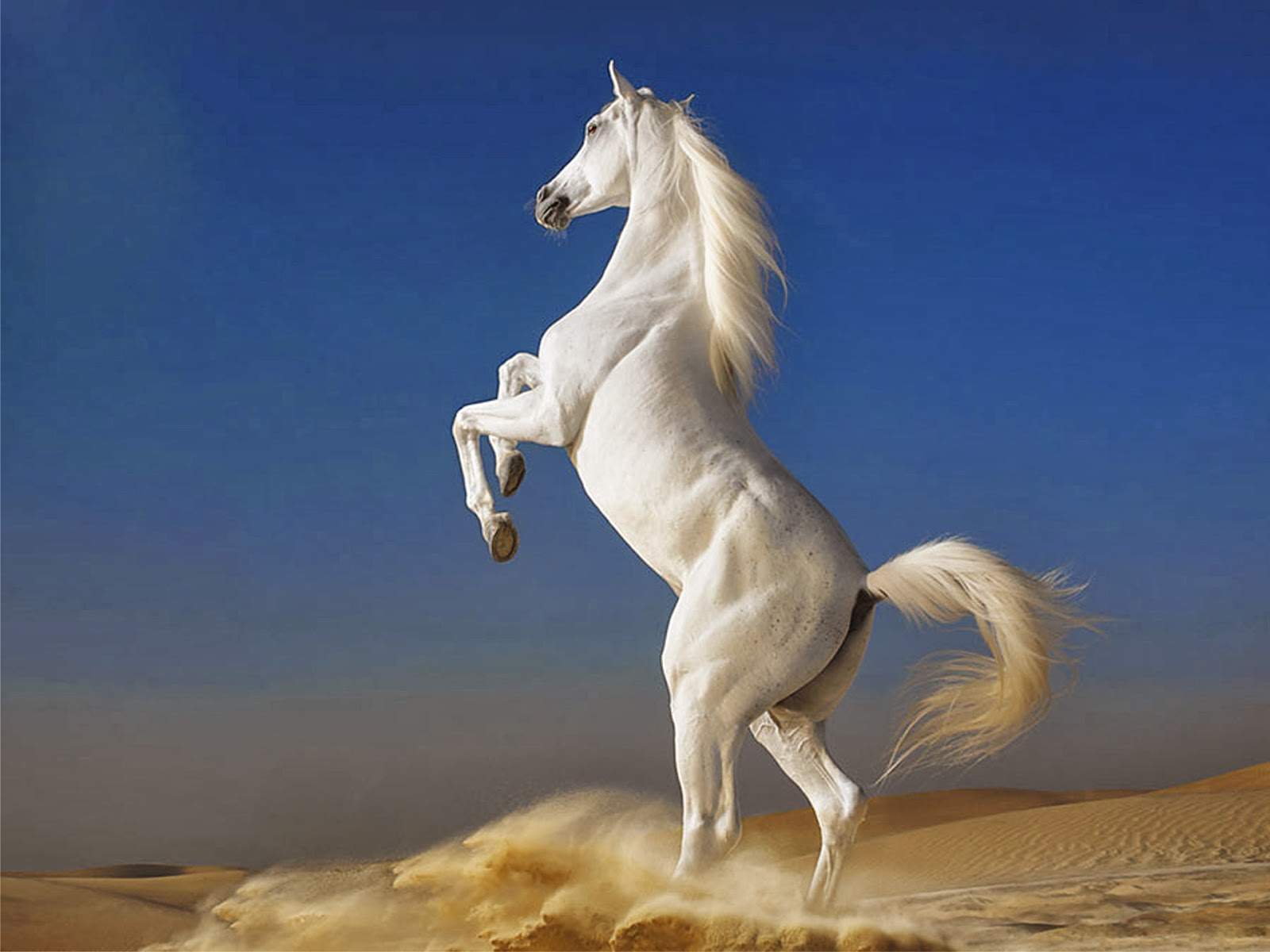 To Set This White Horse Wallpapers On Your