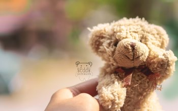 Wallpaper: Teddy Bear
