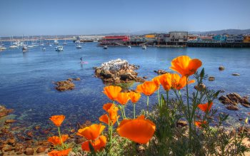 Wallpaper: California Poppies and Fisherman Wharf