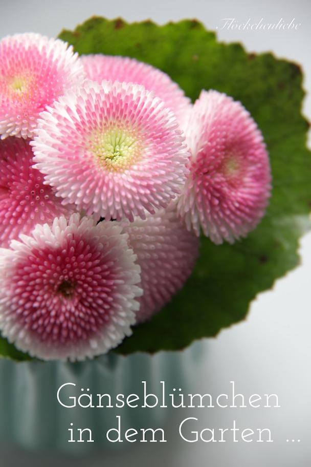 Flockchenliebe Ganseblumchen In Dem Garten
