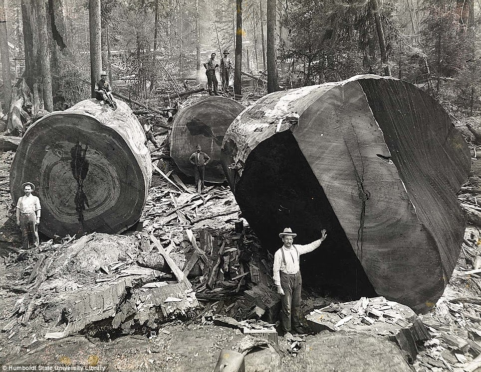 Ultimate Collection Of Rare Historical Photos. A Big Piece Of History (200 Pictures) - Californian lumberjacks