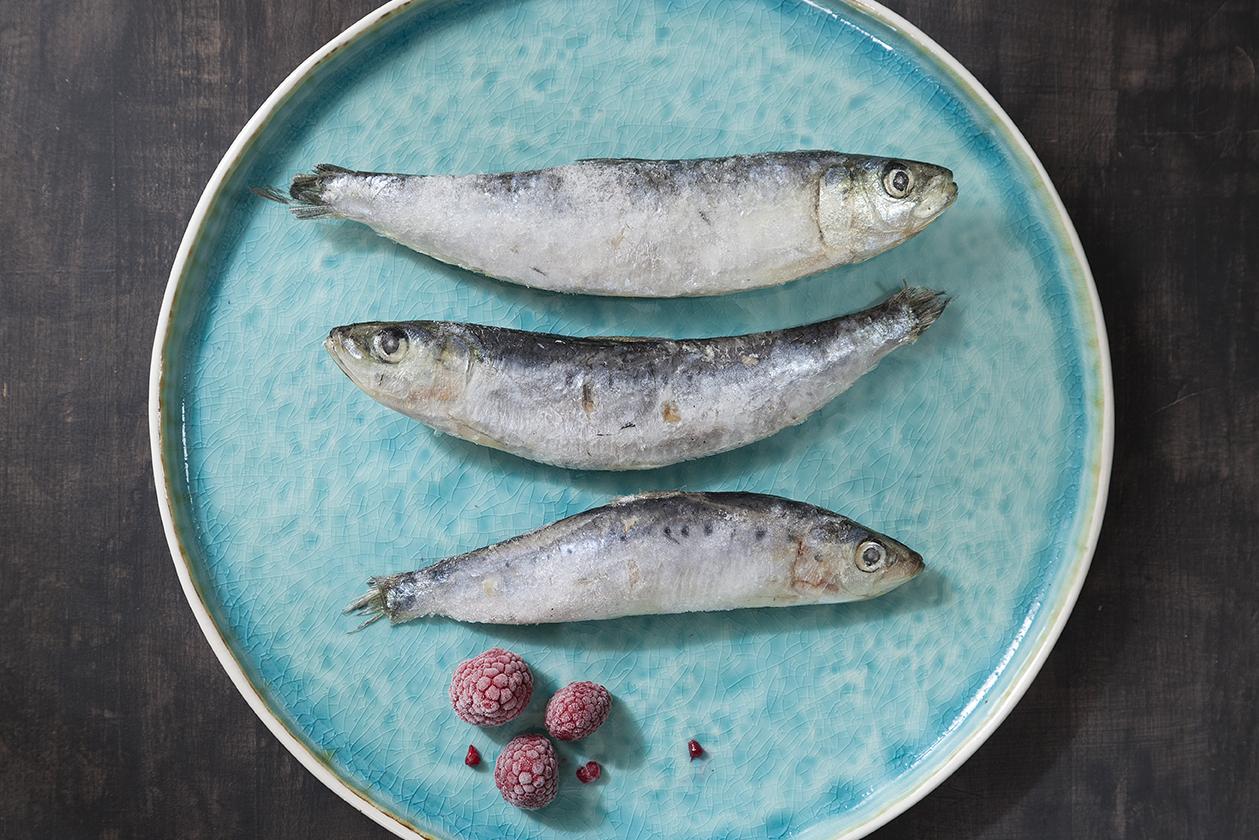kunst sardines van was