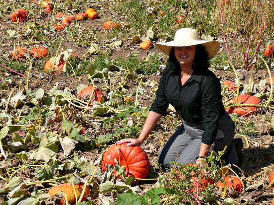 Riley's Farm pumpkins by Lady by Choice
