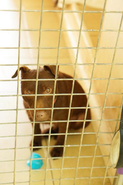 保護犬 動物愛護 シェルター イギリス