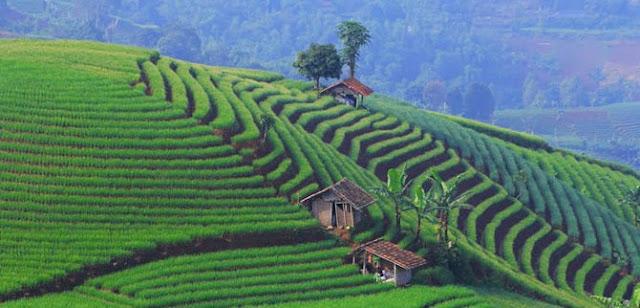 Soal Geografi : Pemanfaatan Lingkungan Hidup dan Kunci Jawaban