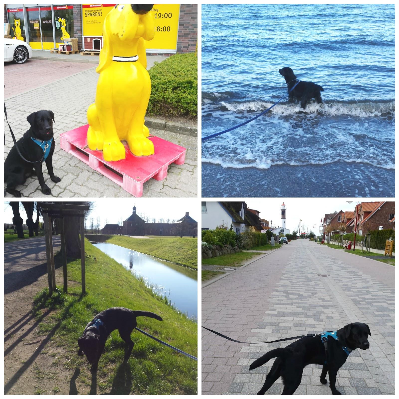 Bildcollage Urlaub in Boltenhagen mit Loki