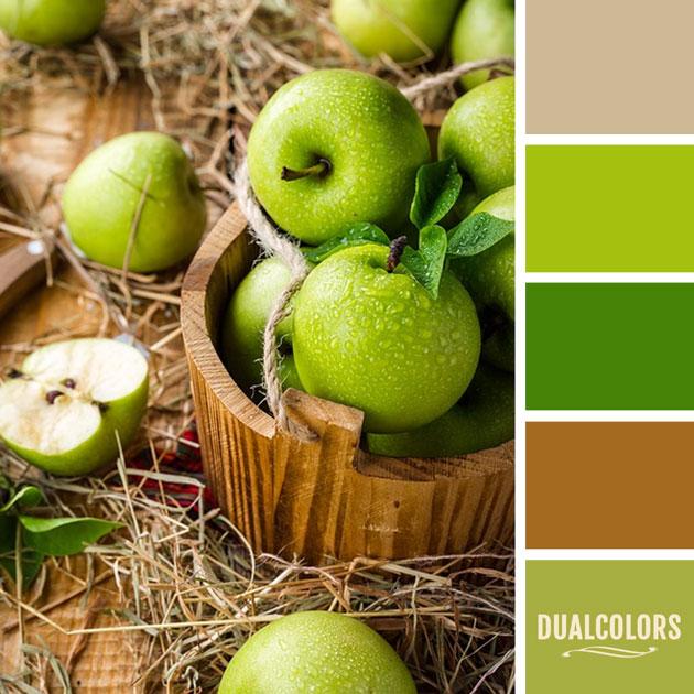 color_paleta_170