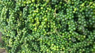 Mua tiêu xanh ở Hà Nội