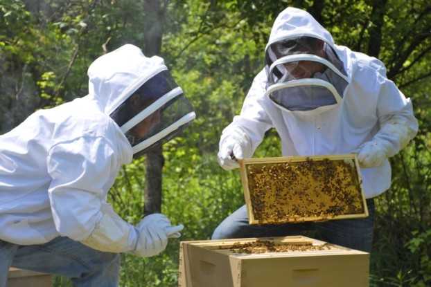 Το Κέντρο Μελισσοκομίας Χαλκιδικής ενημερώνει τους μελισσοκόμους