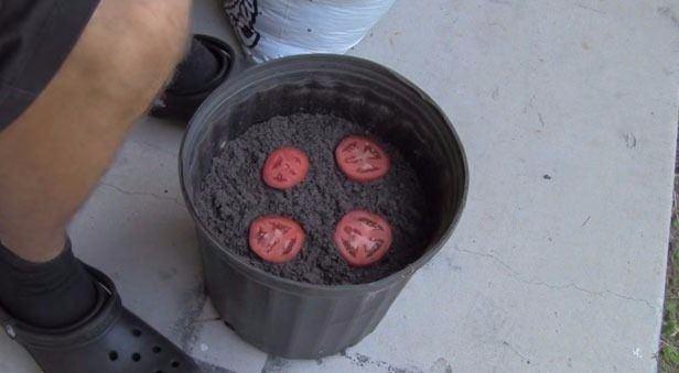 Adamın biri, evdeki bozulan domatesleriyle ne yapacağını bilmiyordu. Onları atmak üzereydi, ancak daha sonra çarpıcı sonuçlar elde etmek için onları  kullanmanın bir yolunu keşfetti.
