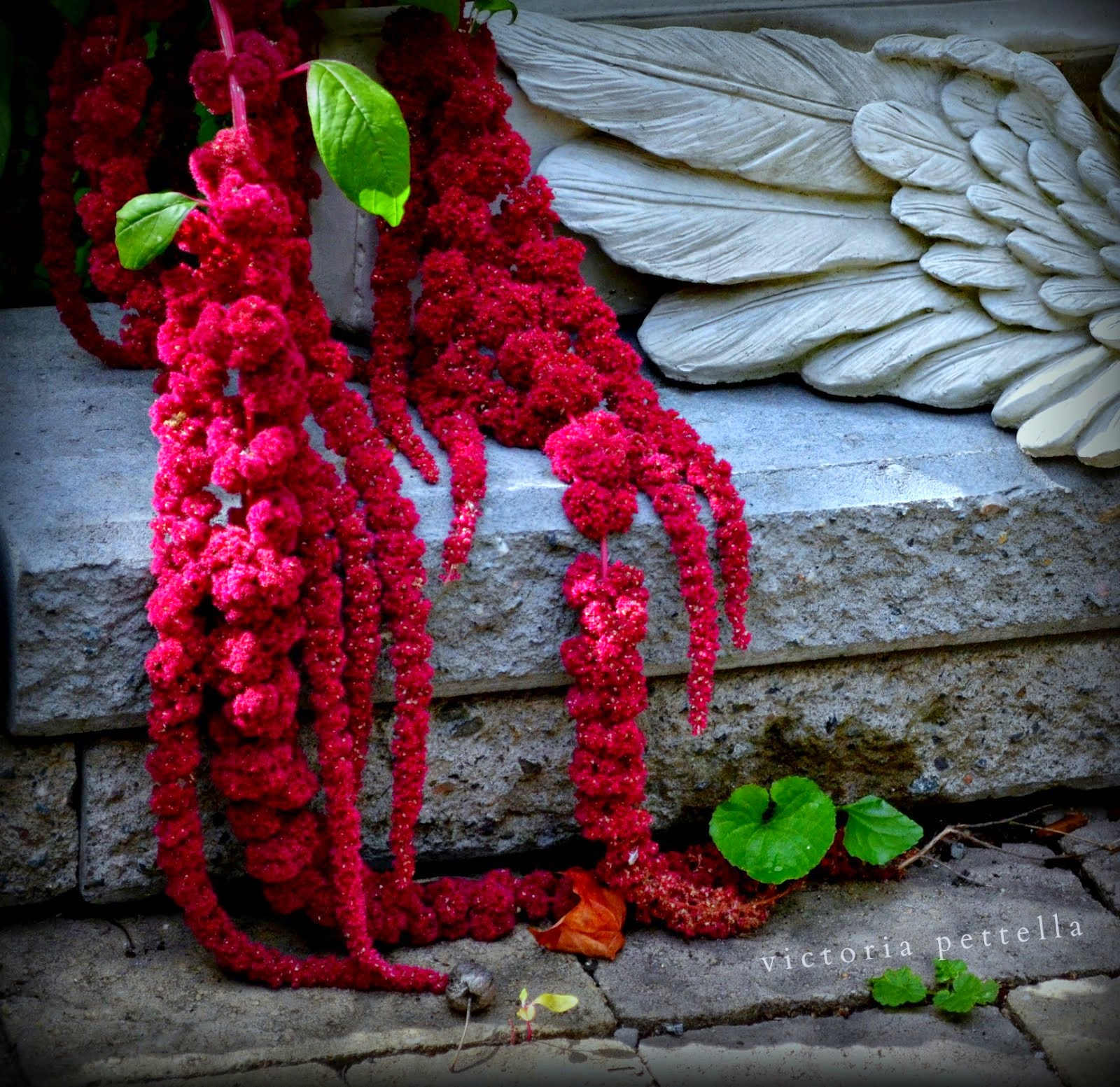 Angels & Amaranthus