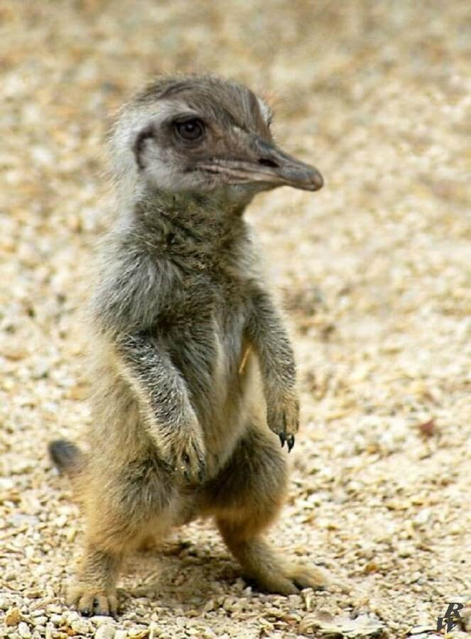 08-Meerkat-and-Bird-Rob-Westdorp-www-designstack-co