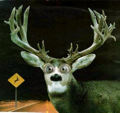 The Federalist A Gop Deer In The Headlights