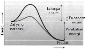Catatan Kecil Soal Beserta Jawabannya Tentang Metabolisme Kelas Xii