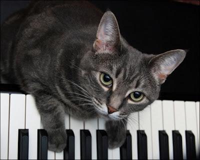 Estimulacion temprana gatos
