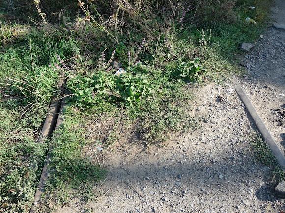 Константиновка. На месте разобранных рельс выросла трава