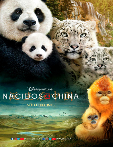 Ver Nacidos en China (Born in China) (2016) Online