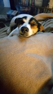 Snoozing Lou lou