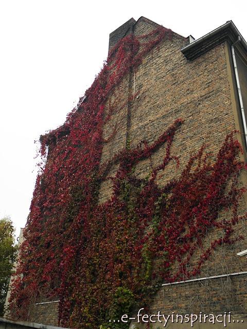 jesień, jesienne klimaty, kolory jesieni, e-fectyinspiracji