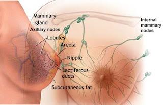 obat alternatif kanker payudara obat herbal kanker payudara yang aman dan mujarab pengobatan alternatif kanker payudara di surabaya pengobatan alternatif kanker payudara di jakarta obat herbal kanker payudara stadium awal pengobatan alternatif kanker payudara di bandung pengobatan alternatif kanker payudara 2010 pengobatan alternatif kanker payudara di yogyakarta pengobatan alternatif kanker payudara di pekanbaru pengobatan alternatif kanker payudara bandung pengobatan alternatif untuk kanker payudara obat herbal anti kanker payudara obat herbal kanker payudara pengobatan alternatif kanker payudara obat herbal kanker payudara pada wanita obat herbal kanker payudara stadium 4 obat alami kanker payudara murah obat herbal kanker payudara tanpa operasi pengobatan alternatif kanker payudara stadium 4 obat herbal kanker payudara stadium 1 obat herbal kanker payudara stadium akhir obat kanker payudara ampuh obat kanker payudara ala ustad danu pengobatan alami kanker payudara stadium awal obat kanker payudara ala hembing obat kanker payudara akut www.obat herbal kanker payudara.com www.obat tradisional kanker payudara.com obat kanker payudara.com obat kanker payudara cina pengobatan alternatif kanker payudara di medan obat alami kanker payudara daun sirsak pengobatan alternatif kanker payudara di jogja obat kanker payudara di apotik obat kanker payudara daun sirsak obat kanker payudara dari kulit manggis obat kanker payudara farmakologi obat kanker payudara femara obat herbal kanker payudara ganas obat kanker payudara ganas obat kanker payudara garcia obat tradisional kanker ganas payudara obat kanker payudara herceptin obat kanker payudara hpai pengobatan alternatif kanker payudara jogja obat kanker payudara jinak obat kanker payudara kaskus obat herbal kanker payudara keladi tikus obat kanker payudara keladi tikus obat kanker payudara kronis obat kanker payudara kulit manggis obat herbal kanker payudara stadium lanjut pengobatan herbal kanker payudara stadium lanjut obat 