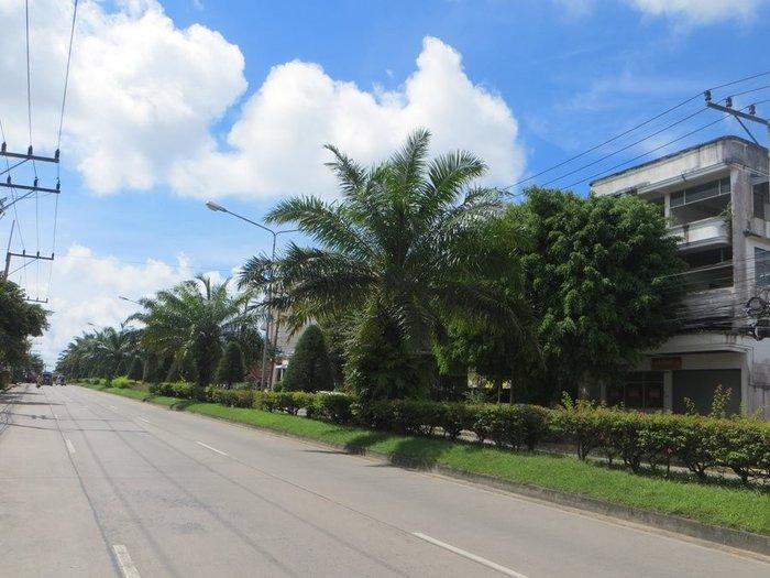 Красивые пальмы Краби