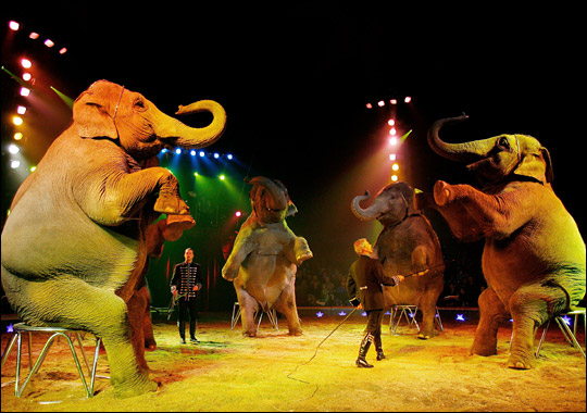 Creative Voice: Fine's Speech: Should animals be kept in the circus?