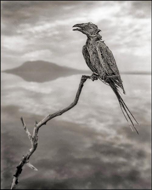 Lago Natron, Tanzânia
