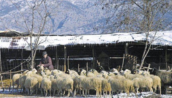 Κτηνοτρόφοι: Ο επόμενος στόχος της Ε.Ε.