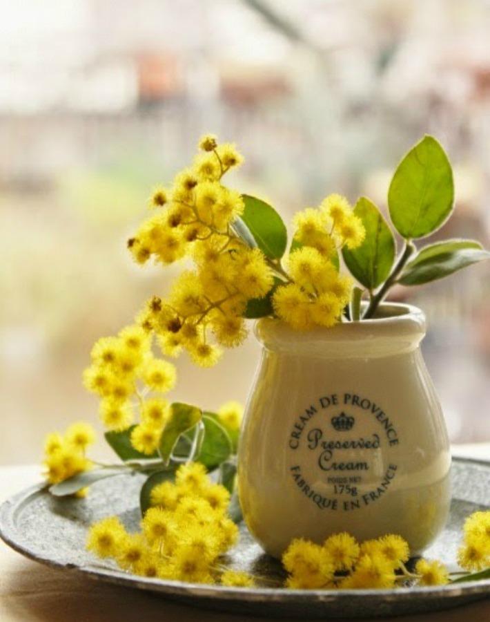 Ilumina tu casa con mimosas