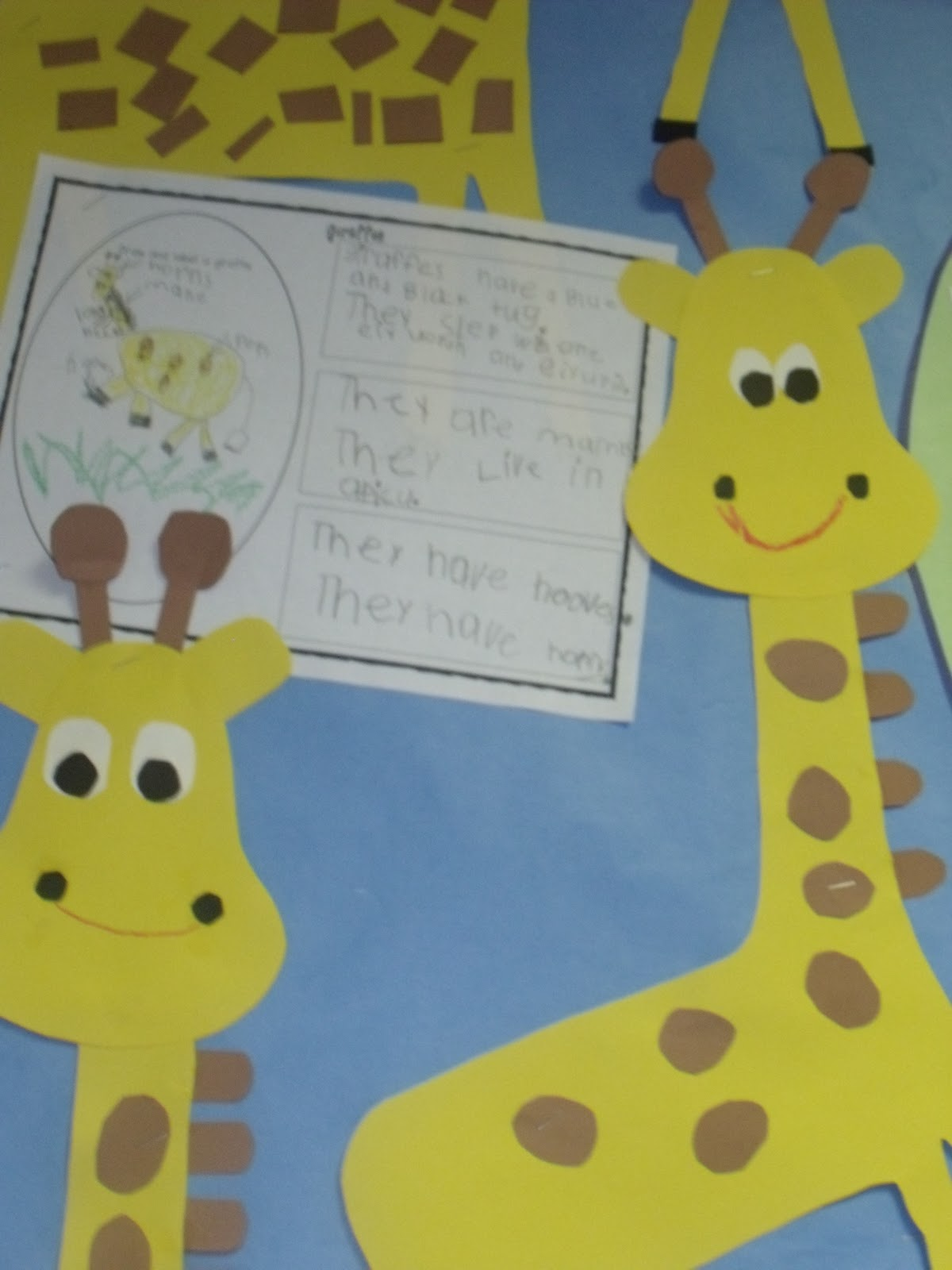 Mrs Jump S Class Zoo Unit Day 1 Giraffes