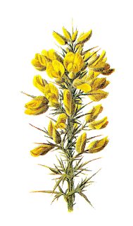 flower stock illustration wildflower
