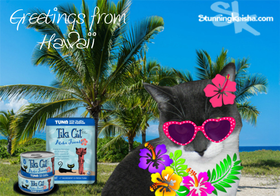 Greetings from Oahu #sponsored #ChewyInfluencer