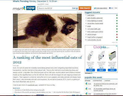 Anakin is #6 and named The Bravest Cat of 2012 in MSN Now's ranking of the most influential cats of 2012