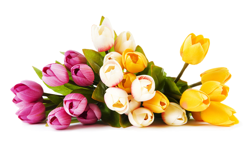 Png Colourful Flowers Hd Shan Studio