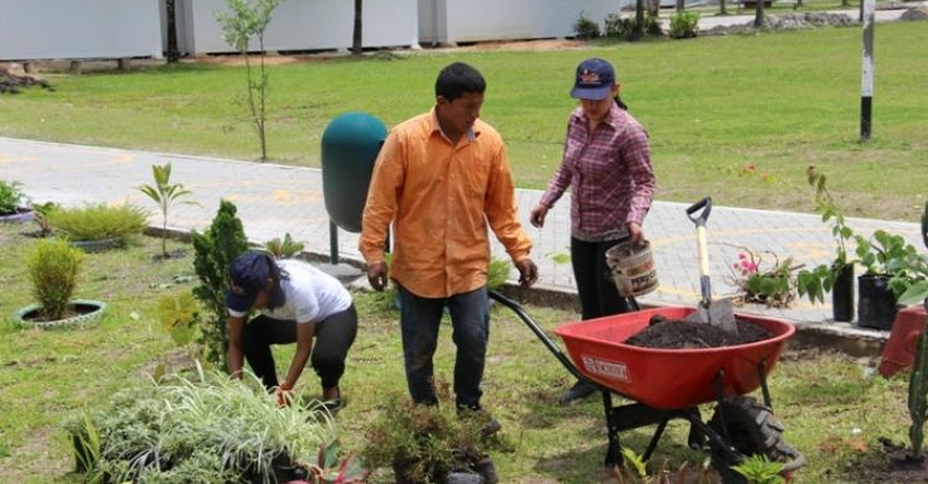 COAR: Mejoran áreas verdes del Colegio de Alto Rendimiento de San Martín