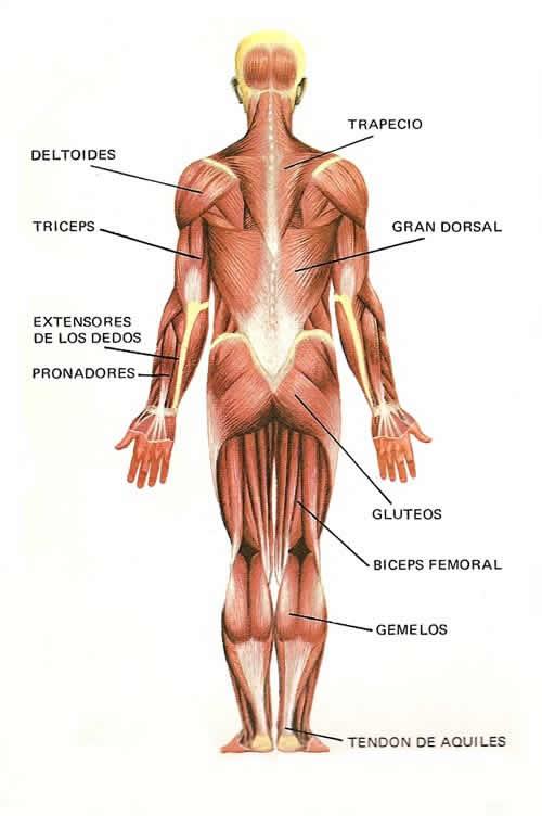 Sistema endocrino yahoo dating