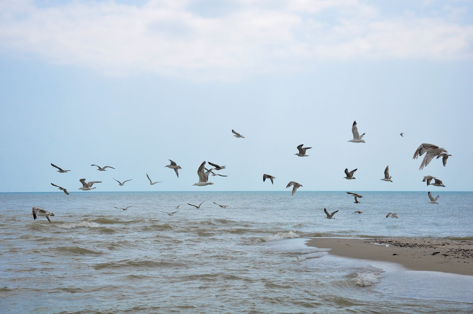 Birds over the Black Sea, Bulgaria