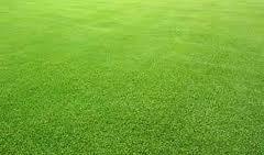 Jenis Rumput Untuk Taman dan Cara Perawatannya
