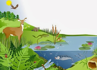 Pengertian Ekosistem Komponen Tipe Tipe Ekosistem Harga Techno