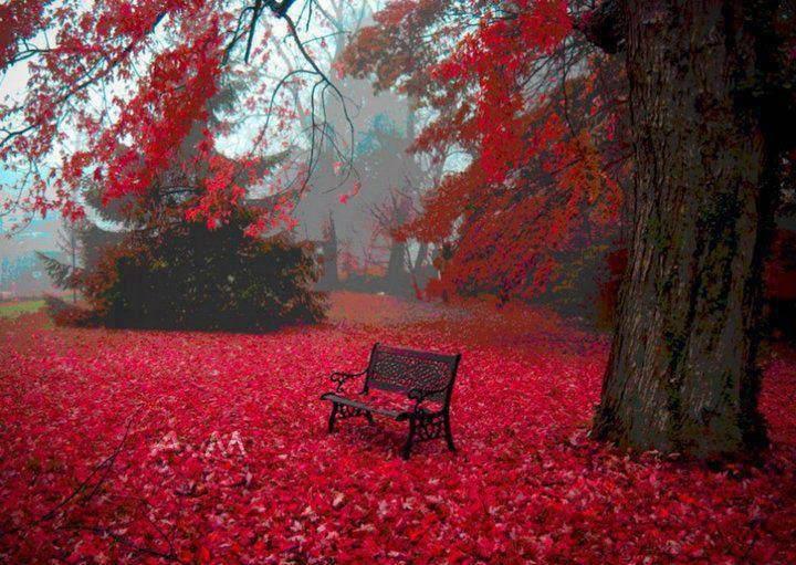 sonbahar orman renkleri resmi