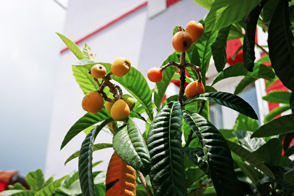 fruits inconnus dans le village de pêcheurs de Trentemoult