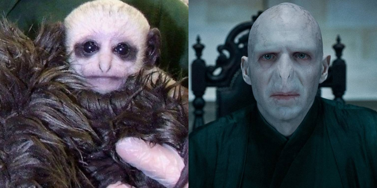 Monkey Named After Voldemort