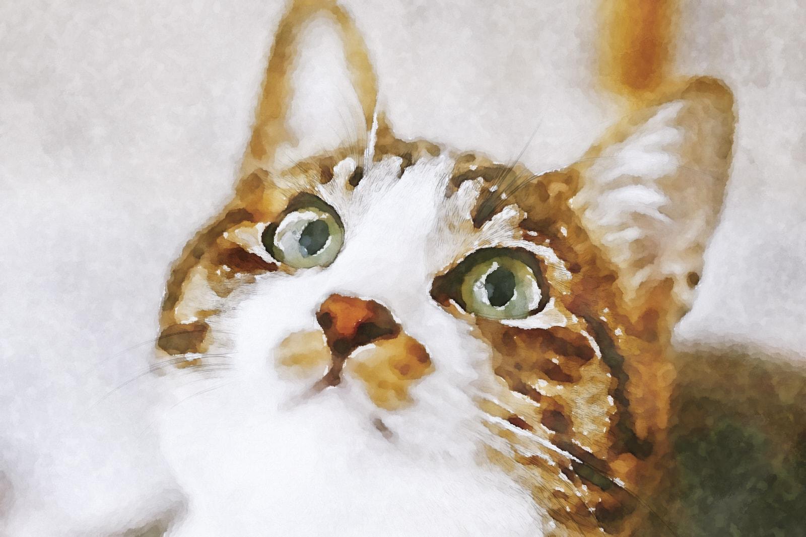 水彩画の見上げる猫
