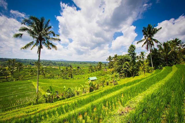 Risaie di Jatiluwih-Bali