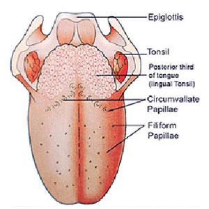 cara mencegah kanker lidah