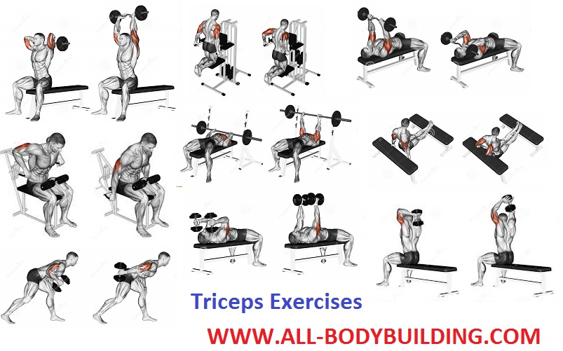 How to Get Bigger Triceps - all-bodybuilding.com