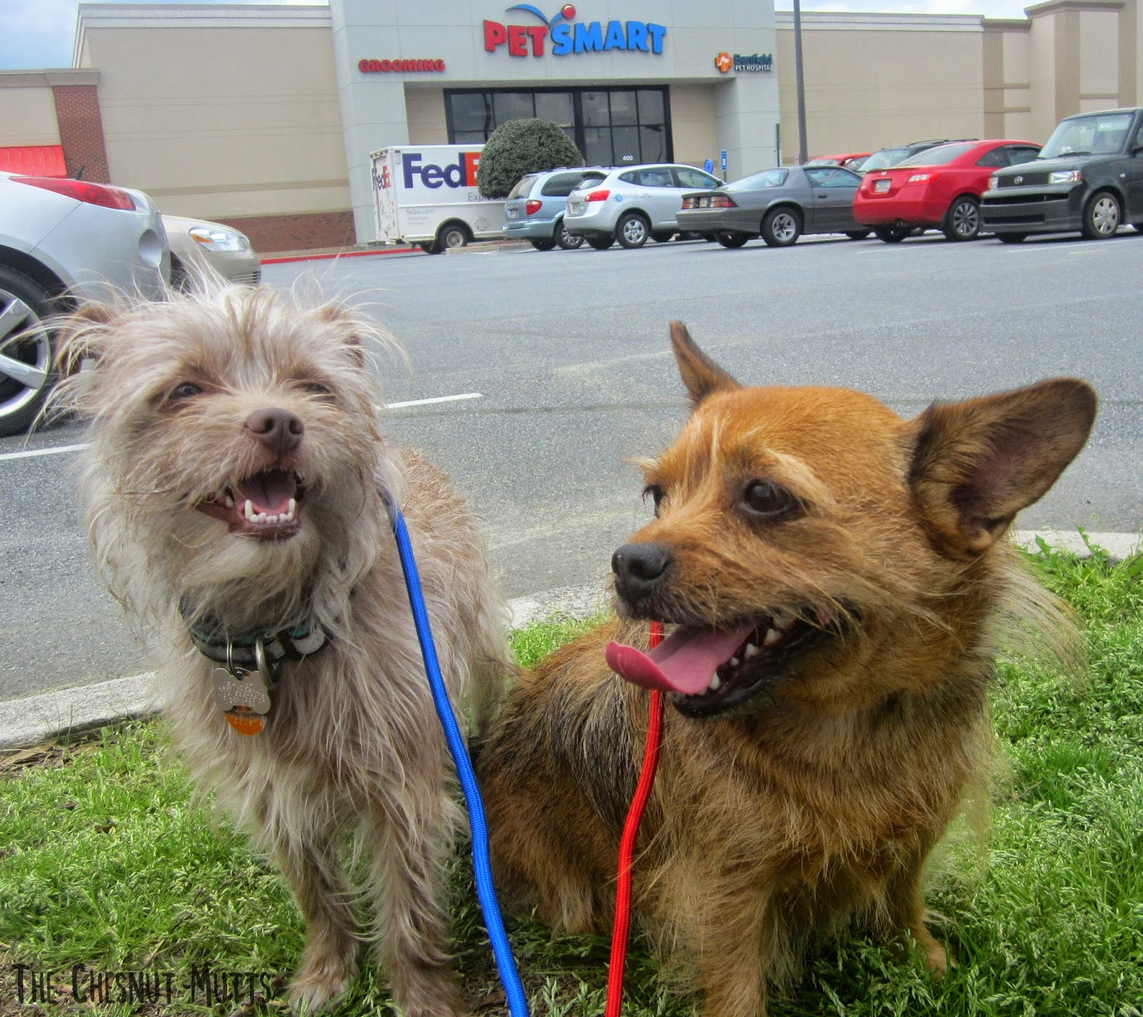 Bailey and Jada in front of Petsmart