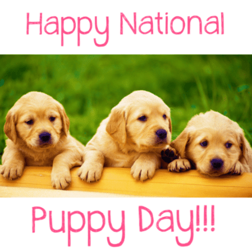 Happy National Puppy's Day 2018 images